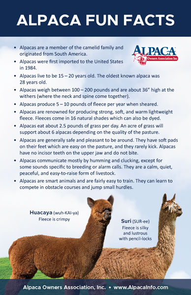 Alpaca Fun Facts