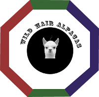 Wild Hair Alpacas LLC