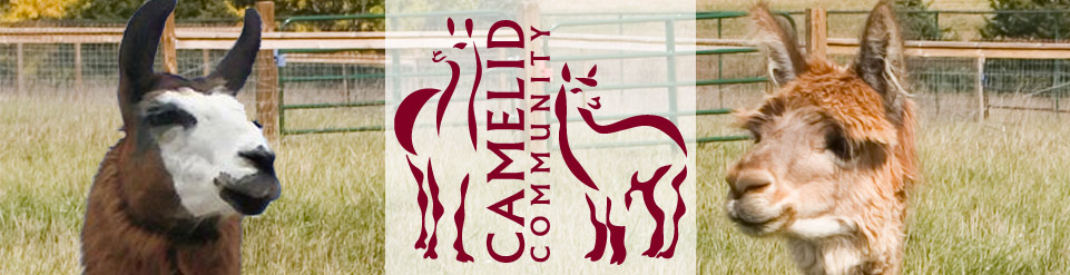 Camelid Community